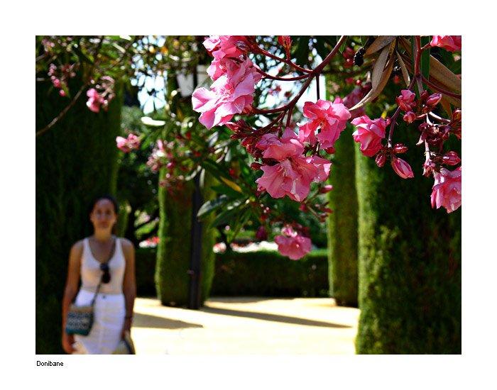 """""""Las flores de Córdoba"""" por Donibane"""
