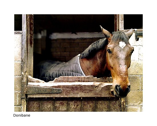 """""""The horse"""" by Donibane"""