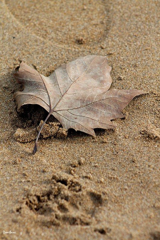 Pequeñas grandes cosas que uno se encuentra en las playas de Octubre por Donibane
